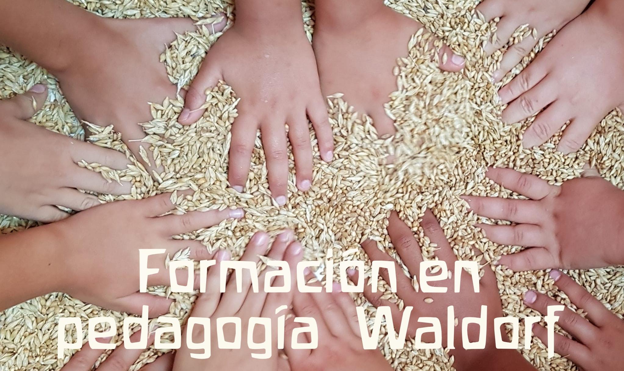 Formación en Pedagogía Waldorf Primaria